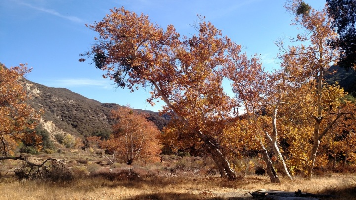 Cienega Campground, Angeles National Forest, CA
