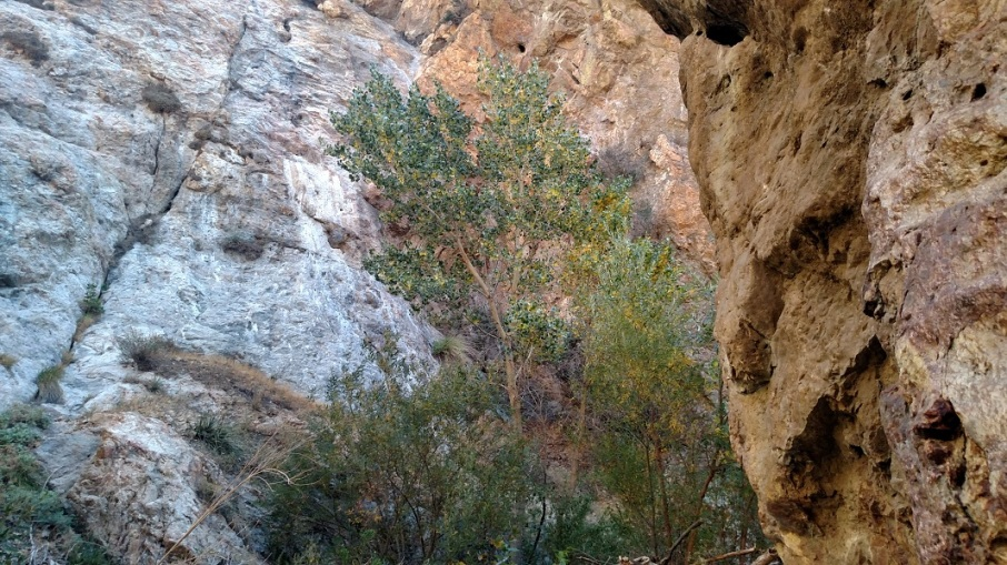 Fish Canyon Narrows, Angeles National Forest, CA