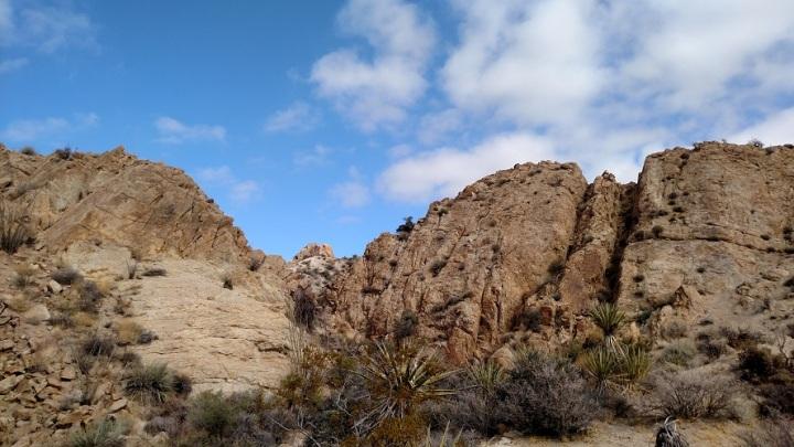 Lost Palms Oasis Trail, Joshua Tree National Park