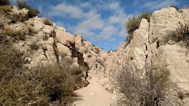 Lost Palms Oasis Trail, Joshua Tree National Park