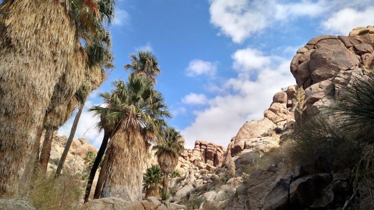 Joshua Tree National Park Lost Palms Oasis