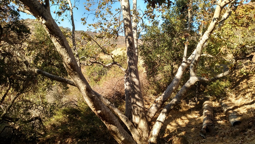 Brush Canyon Trail, Griffith Park
