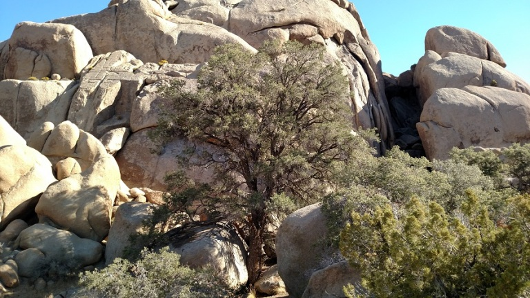 Split Rock Loop Trail, Joshua Tree