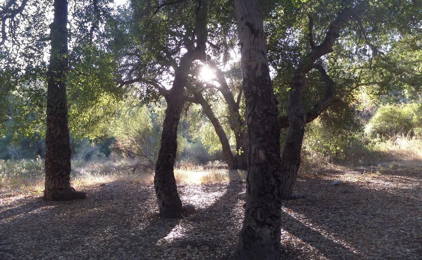 Bear Creek Trail, San Gabriel Wilderness