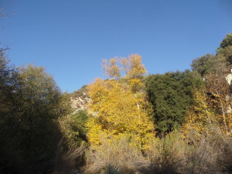 Bear Creek, San Gabriel Wilderness, CA