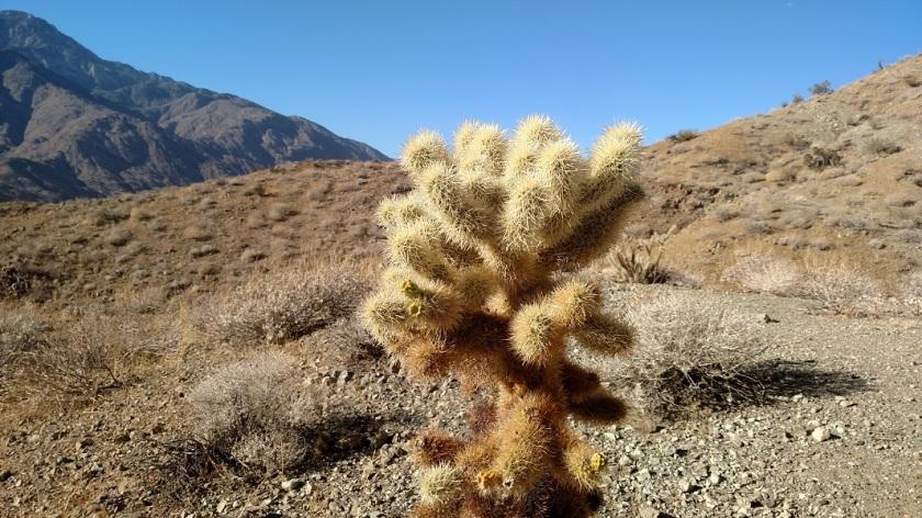 Bogert Trail, Murray Hill, Palm Springs