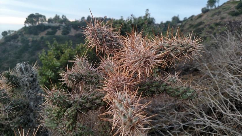 Forrestal Reserve, Palos Verdes Peninsula, CA