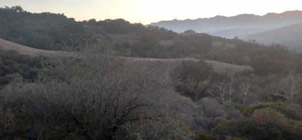 Musch Meadow, Topanga State Park