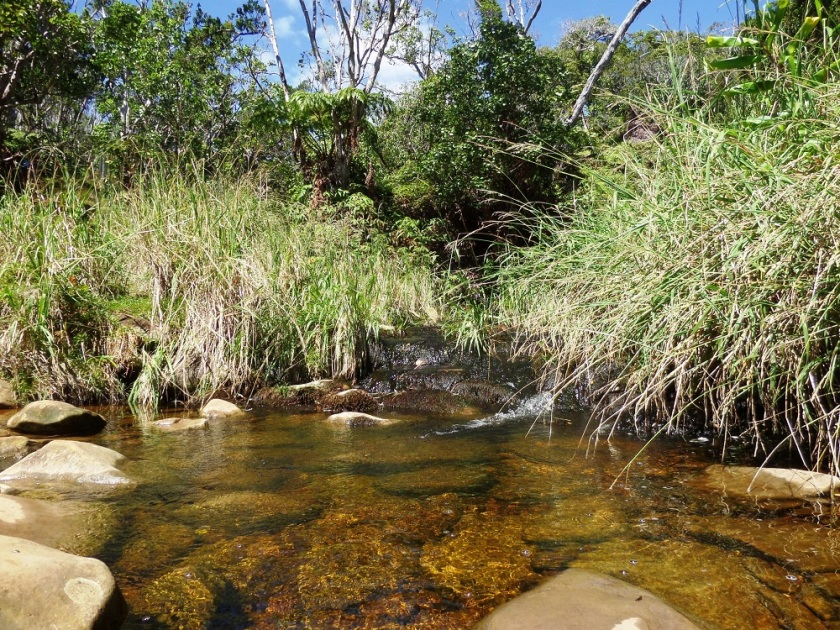 Alaka'i Swamp Trail, Kauai, Hawaii