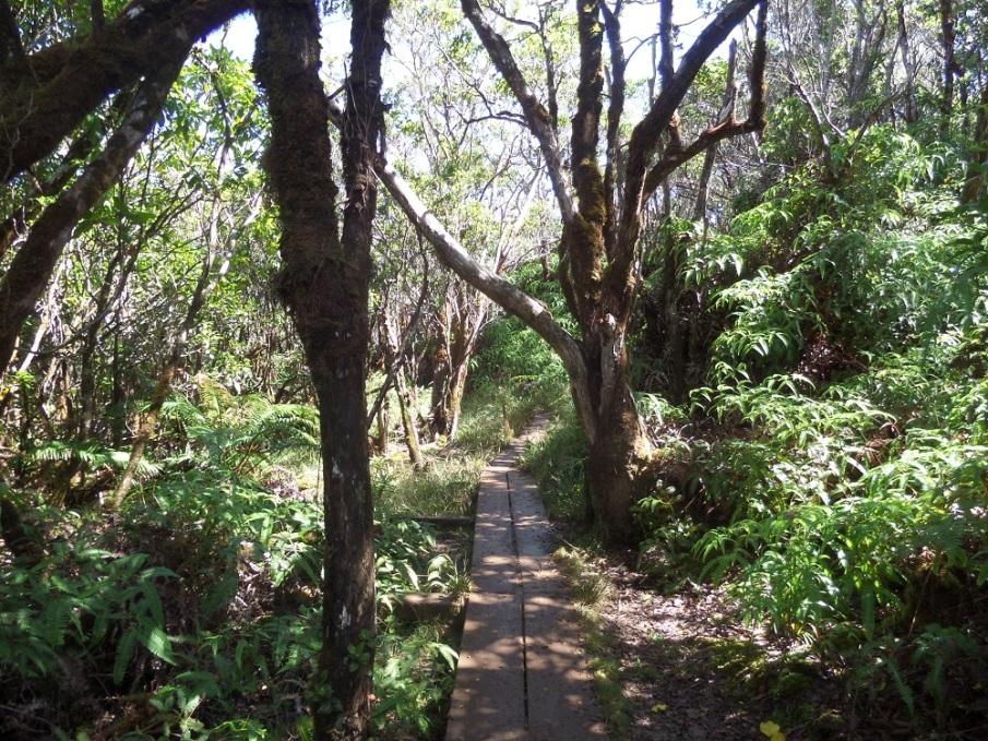 Pihea Trail, Koke'e State Park, Hawaii