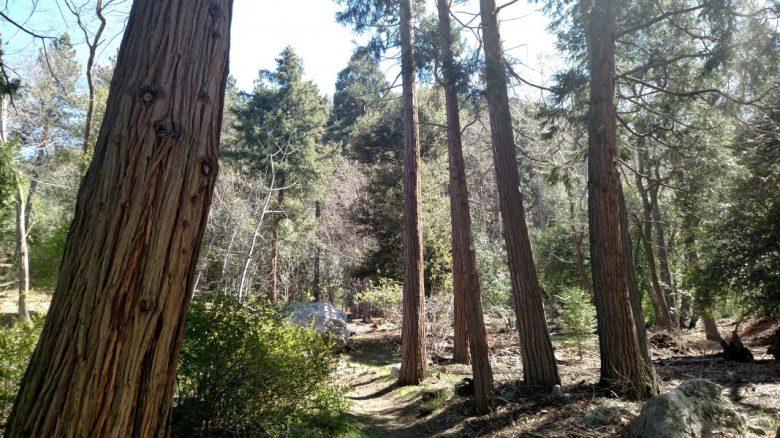 Aqueduct Trail, Bearpaw Preserve