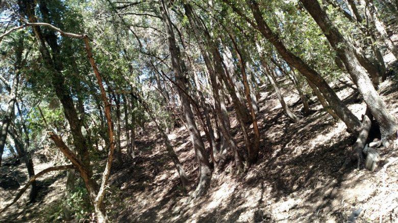 Aqueduct Trail, San Bernardino National Forest