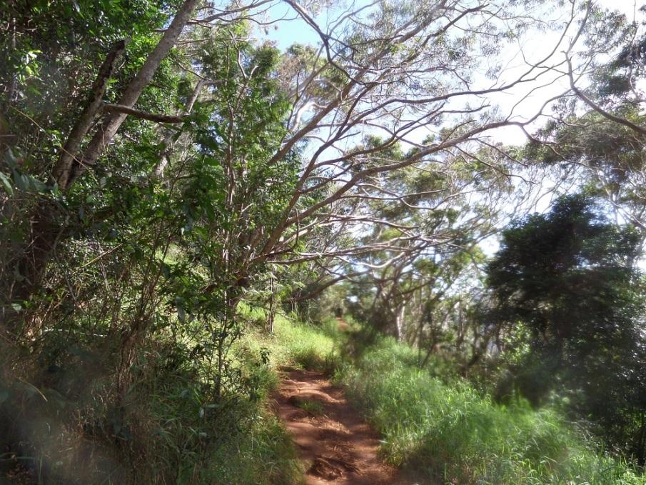 Canyon Trail, Kauai, Hawaii