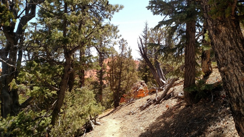 Golden Wall Trail, Dixie National Forest, Utah