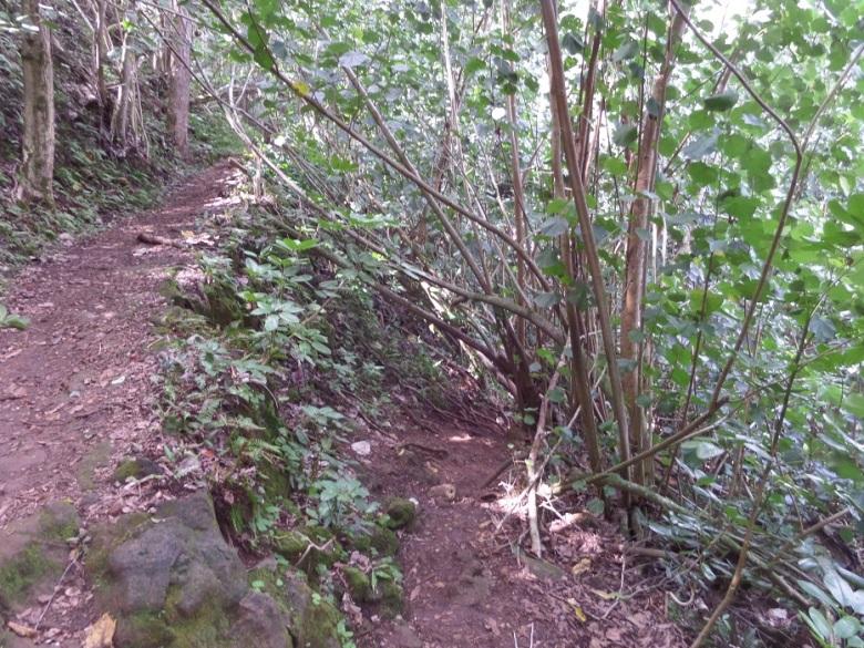 Ho'opi'i Falls hike, Kauai, Hawaii