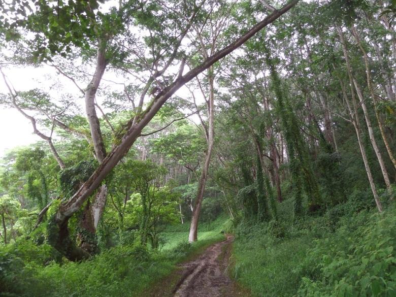 Kuilau Ridge Trail, Kauai, Hawaii
