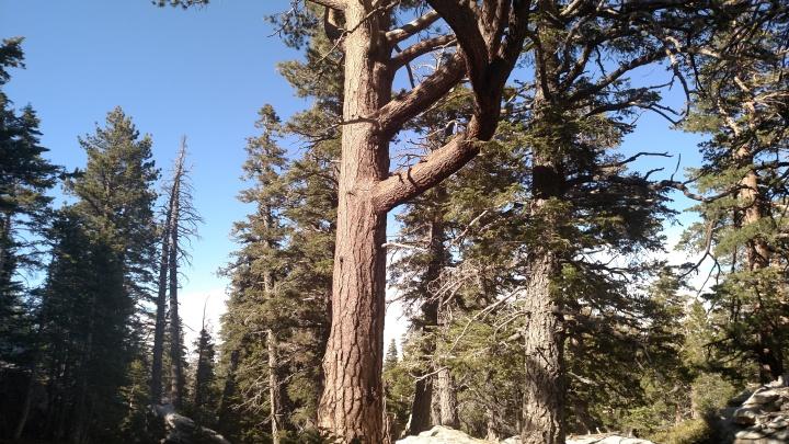 Hidden Divide, San Jacinto Mountains, CA