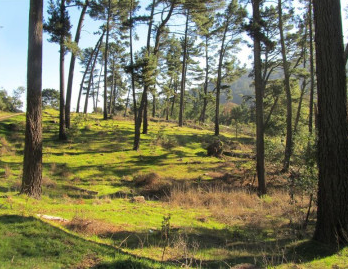 East Ridge Loop, Redwood Regional Park