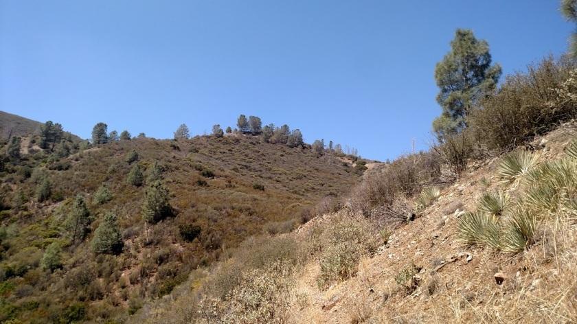Figueroa Mountain Recreation Area, Santa Barbara County, CA