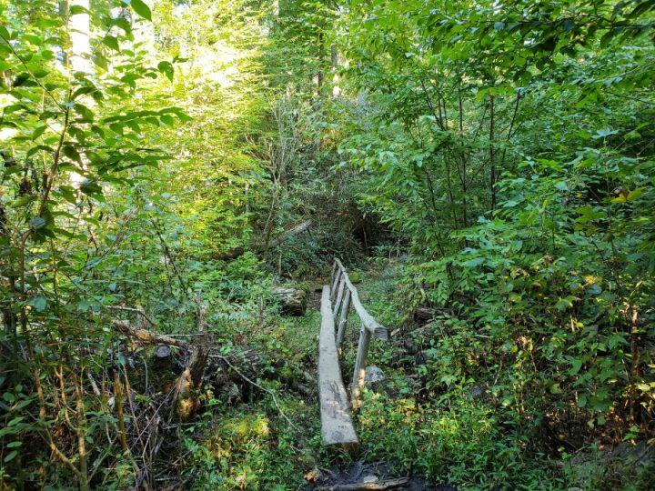 Footbrdige, Gabes Mountain Trail
