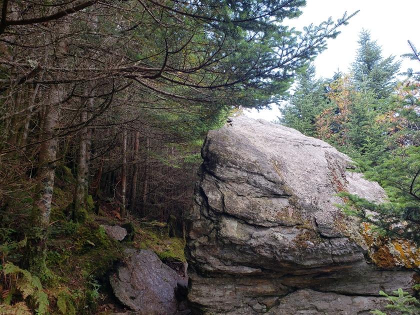 Mt. Mitchell Trail, North Carolina