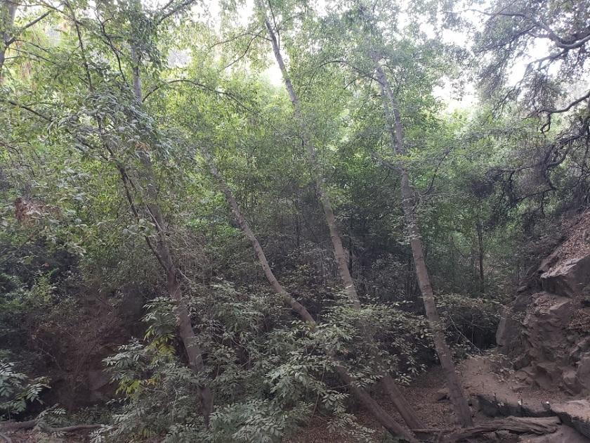 El Prieto Canyon, Altadena, CA