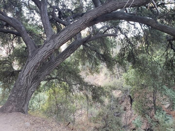 El Prieto Canyon, CA