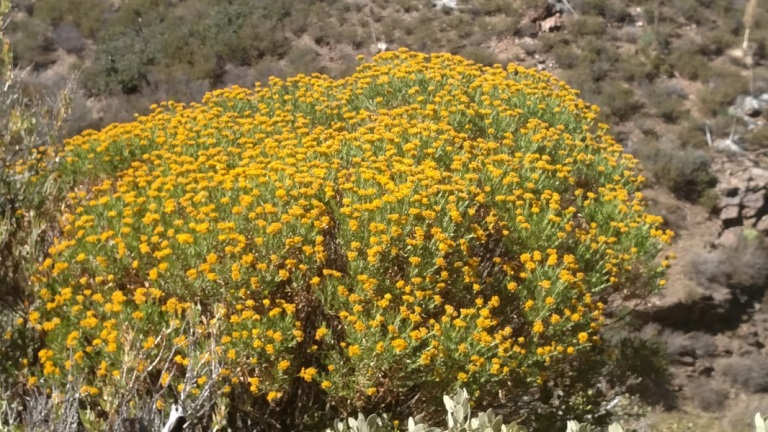 Pacific Crest Trail, Anza-Borrego Desert State Park