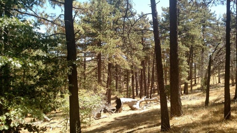 Cuyamaca Rancho State Park, CA