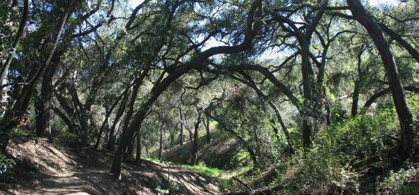 Cherry Canyon, Glendale, CA
