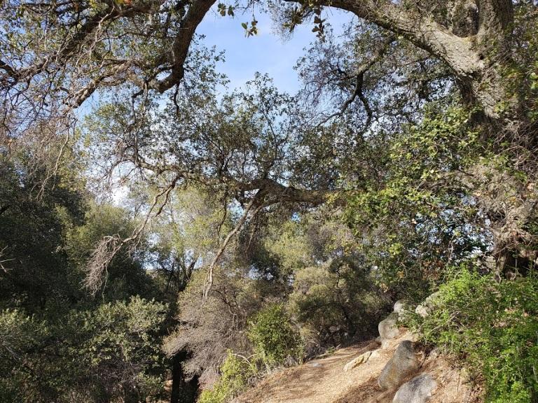 Pacific Crest Trail, Warner Springs, CA