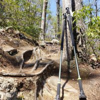 hiking poles against a tree